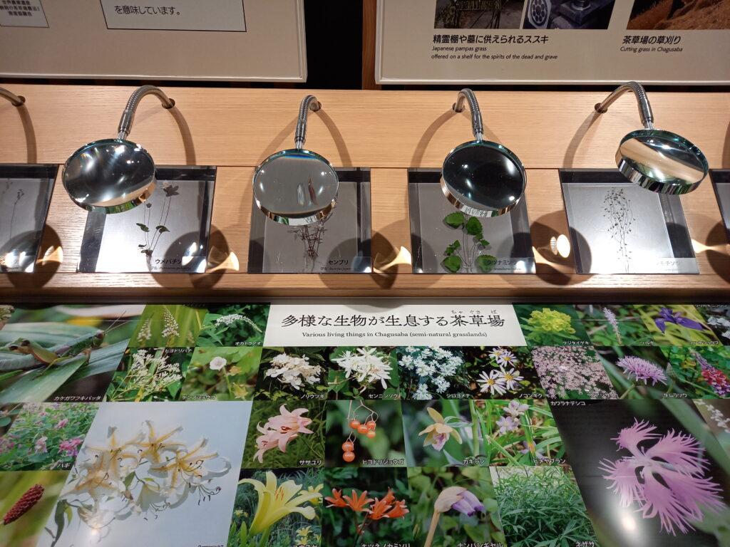 茶草場の写真